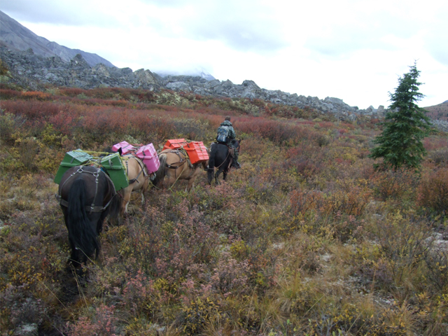 horses Hunting in Yukon - Canada