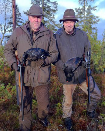 black grouse Hunting in Sweden