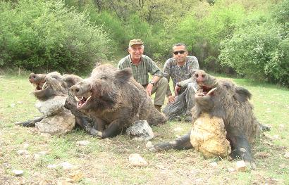 wildboar Hunting in Turkey