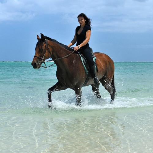 Pferd in Mauritius